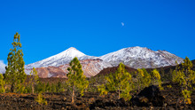 Spain, Tenerife, Blue Sky And Moon Over Lava Fields With Some Green Conifer Trees And White Snow Covered Volcanic Mount Teide In Winter Season