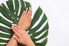 Woman's Hands With Beautiful Manicure Lying On Monstera Leaves
