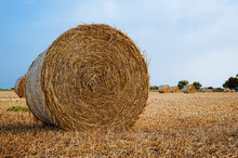 Bales Of Hay During The Harvest.