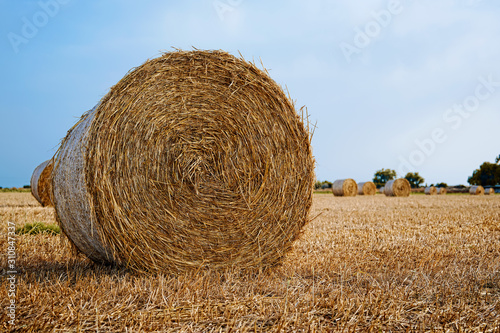 Bales of hay during the harvest. Canvas Print