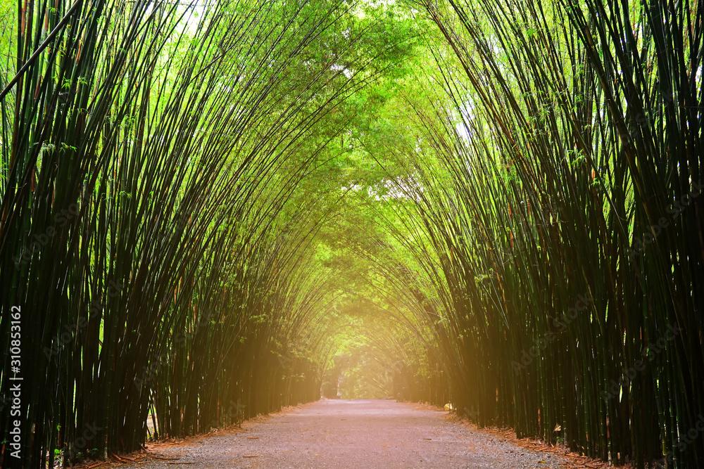 Fototapeta Landscape the tunnel trees