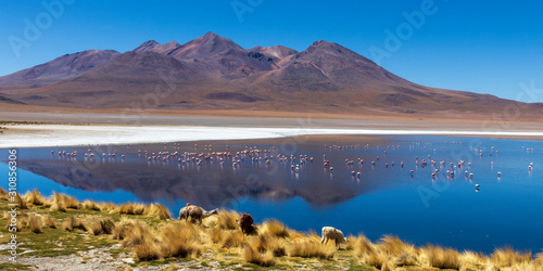 Laguna with flamingos on the altiplano in bolivia Wallpaper Mural