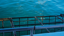 Floating Cage For White Shark Diving Activity In South Africa One Of The Most Exciting Activity For Tourist