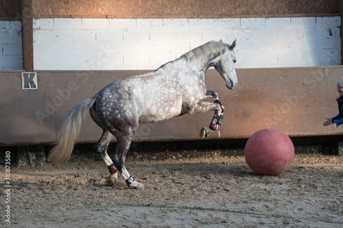 Photographie cheval manege ballon