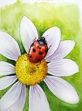 Daisy Flower Ladybug Nature Watercolor Drawing Illustration