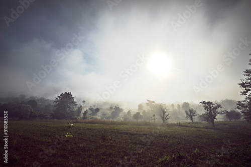 Field and Trees in Sunshine - 310883530