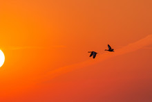 Silhouette Of Two Flying Wild ...