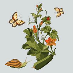 Botanical illustration of cucumber plant, snail, butterfly and ladybug