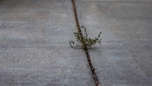 Selective Focus Shot Of A Broken Branch Fallen On The Sidewalk