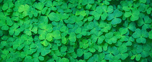 Green Clover Leaf Nature Abstr...