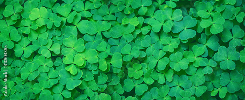 Foto Green clover leaf nature abstract background