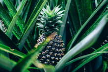 Closeup Of A Young Fruit Growi...