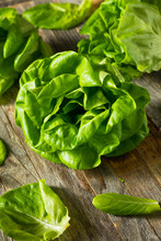 Raw Green Organic Butter Lettuce