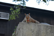 Squirrel Eating On A Wall