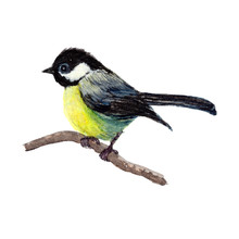 Bird.colorful Watercolor Bird Isolated On White Background, Natural Illustration, Watercolor Bird Collection.