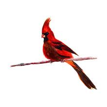 Bird.colorful Watercolor Bird ...