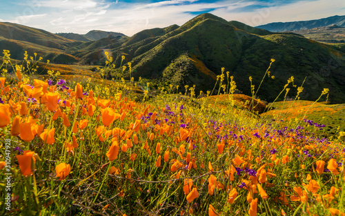 Canvas Print MARCH 15, 2019 - LAKE ELSINORE, CA, USA - Super Bloom California Poppies in Wa
