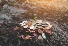 Seedling Of Plants That Are Born On Coins