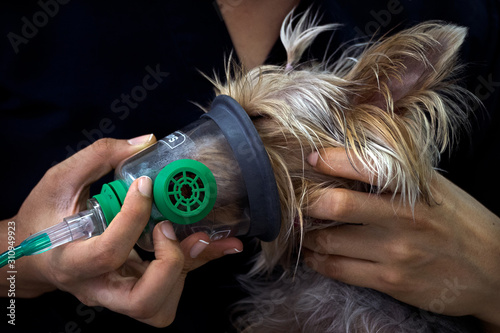 Photo Preoxygenation technique in dog with oxygen mask