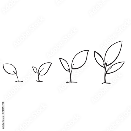 Fotografie, Obraz Line art growing sprout plant with hand drawn doodle style