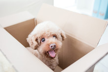 Dog In A Box Isolated On A Whi...