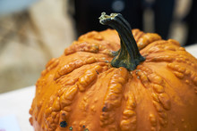 Decorative Pumpkin. Orange Knu...