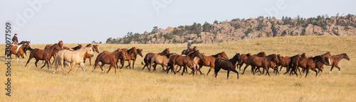 Fototapeta Horse Herd obraz