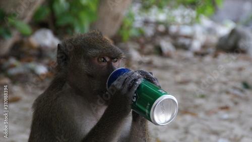 Photographie monkey