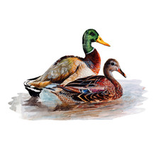 Duck.Watercolor Single Duck Animal Isolated On A White Background Illustration.