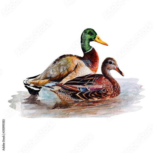 Stampa su Tela Duck
