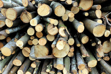 Chopped Thin Logs Stacked In A Pile