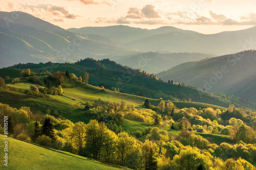 Obraz mountainous countryside at sunset. landscape with grassy rural fields and trees on hills rolling in to the distance in evening light. distant ridge and valley in haze. fantastic scenery in springtime - fototapety do salonu