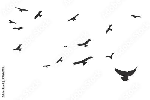 Fotografía  Silhouette of a flock of flying birds