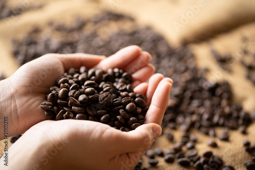 Fototapeta コーヒー豆を山盛りに持つ若い女性の手元 obraz