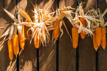 Dried Corn Cob That Was Hanging Out In The Sun.