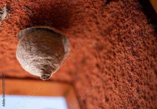 Fotomural alveare di api e vespe all'interno di una casa