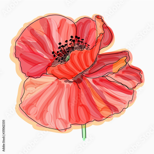 Obraz maki   ink-pencil-watercolor-poppy-flower-sketch-hand-drawn-nature-painting