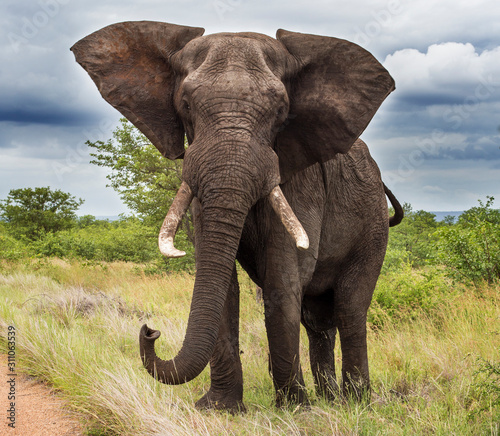 Elephants in the Kruger National Park South Africa Wallpaper Mural