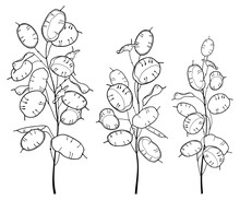 Set Of Outline Lunaria Or Honesty Or Moonwort Dried Flower Bunch In Black Isolated On White Background.