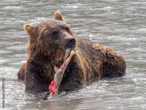 Bear Billede på lærred