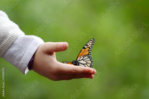 Photo monarch butterfly in a chindren hand