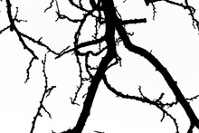 Fractals - Tree Branches In Black And White