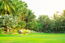 Fresh Green Manila Grass Yard, Smooth Lawn In A Beautiful Botanical Palm Trees Garden And Good Care Landscapes In The Public Park Under Cloudy Sky
