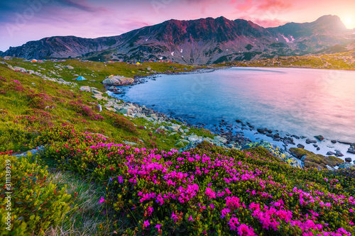 Pink rhododendron flowers and Bucura lake at sunset, Retezat mountains Canvas Print