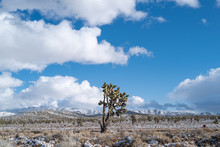 A Lone Joshua Tree In The Mojave Desert With Snow Covered Mountains