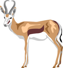 Springbok Antelope - Colour Ve...