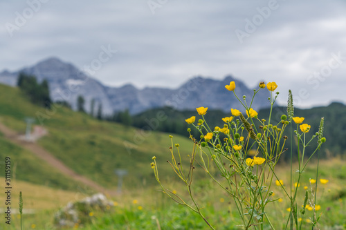 Wildblumen, unscharfe natur und berg landschaft hintergrund Canvas Print