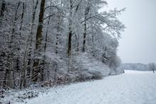 Waldrand Im Winter