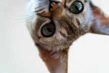 Cat Looking At You Closer