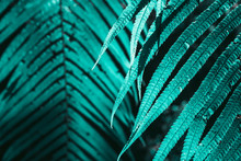 Different Exotic Plants, In A Tropical Environment And In The Forest. In The Colors Of The 2020 Trend. Aqua Mente, Lush Lava And Phantom Blue. Pink Plants, Flowers, Leaves And Tropics. Green Color
